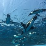 travel-sunshine-aquarium-penguin8